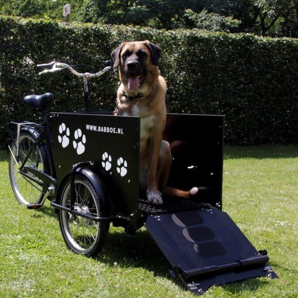 Babboe Dog 7